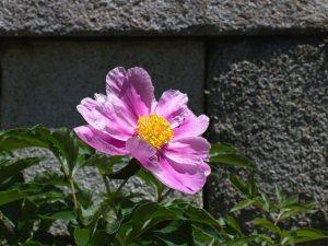 Kukka koreassa