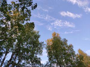 Puita ja ensimmäiset syksyn merkit Kolilla