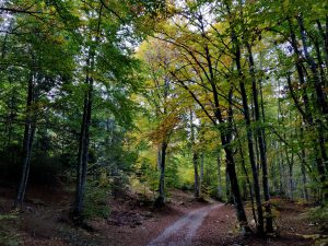 Metsäpolku Brentolla
