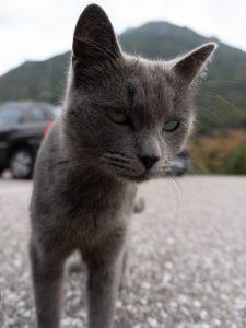 Toinen vihainen kissa