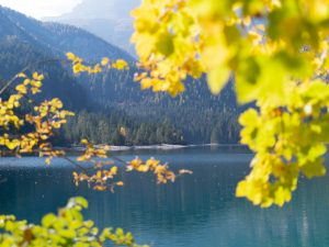 Lehdet ja järvi