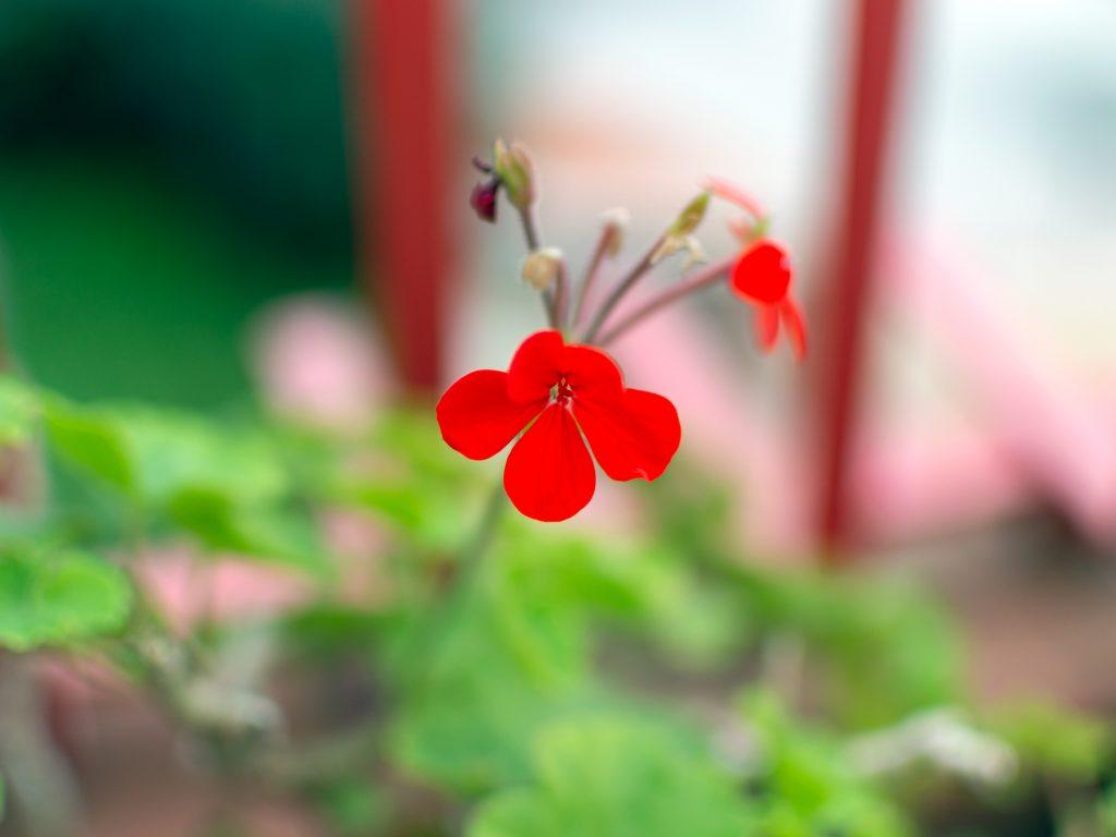 Kukat kukkivat marraskuussa