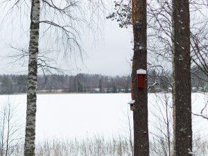 Talvinen järvimaisema