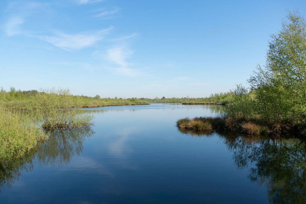 De Groote Peel kansallispuistossa oli vesialuieita, heinikoita ja pusikkoa,