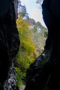 Keiltaisia puita kallioiden välissä